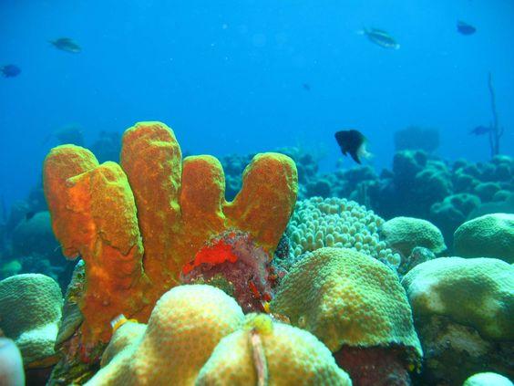 Scubacaribe Puerto Plata - Diving Schools