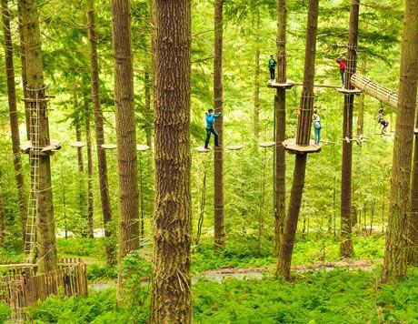 Go Ape treetop adventures!