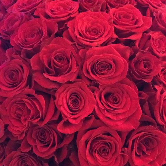 roses on roses on roses on we heart it flower