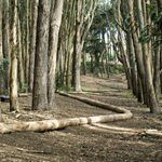 WOOD LINE BY ANDY GOLDSWORTHY Public Art in San Francisco