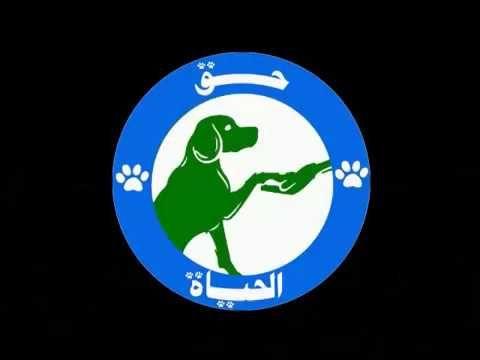 مبادرة حق الحياة الكاتبة ريم أبو عيد إنسانيتك الحقيقية تبدأ من الرفق بالحيوان ريم أبو Blog Posts