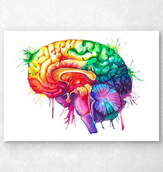 Watercolor brain anatomy art print - Codex Anatomicus