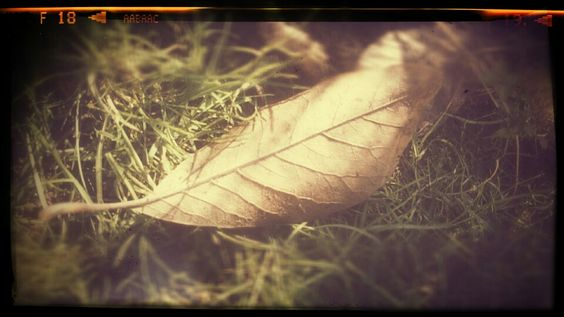 Morning leaf