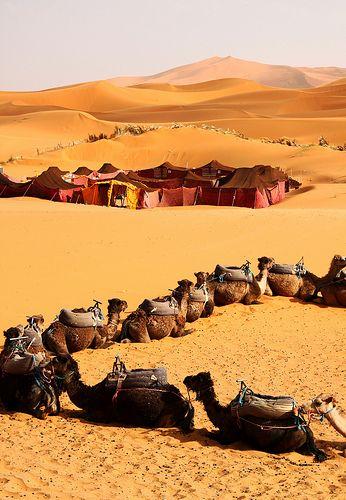 Preparing to sleep in the desert. Sahara desert Morocco: