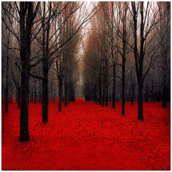 Red Forest Photography Print fairy tale inspired red by Raceytay