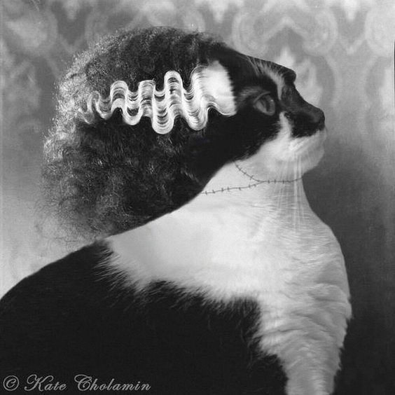 frankensteins cat Frankenstein's cat wiki is a fan made website which will provide information on all the diffrent areas of the cbbc television series this wiki will eventually cover characters, episodes, location etc which appear within the series.