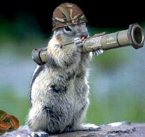 Squirrel Prepared For Battle Squirrels Pinterest Squirrel - Squirrel photographed in heroic pose becomes star of hilarious photoshop battle