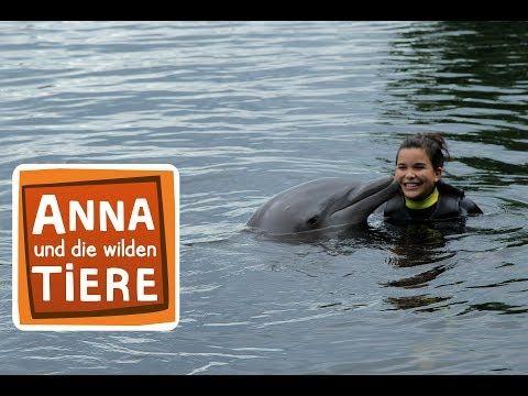Wie Pupst Der Delfin Doku Reportage Fur Kinder Anna Und Die Wilden Tiere Youtube Wilde Tiere Tiere Mit Delfinen Schwimmen
