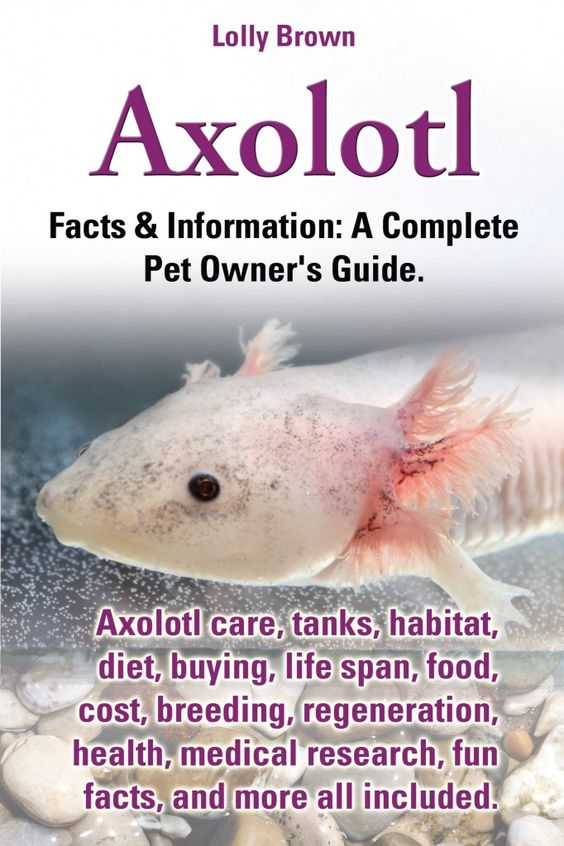 Axolotl Facts & Information: A Complete Pet Owner's Guide. Axolotl care, tanks, habitat, diet, buying, life span, food, cost, breeding, regeneration, health, medical research, fun facts, and more all included.