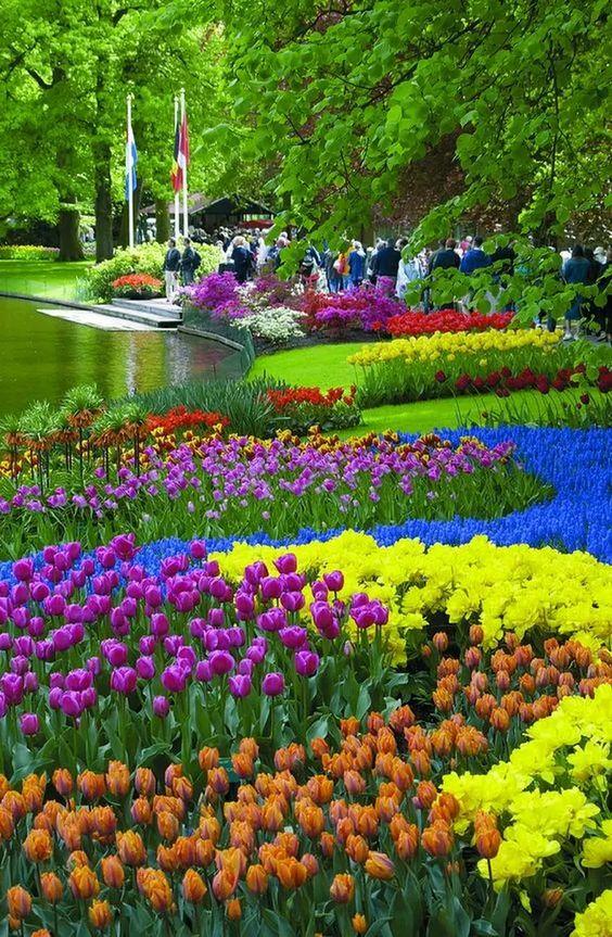 水辺の綺麗で美しい花畑