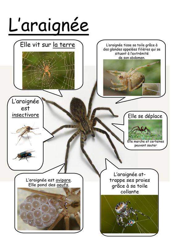 Fiche araign e maternelle pinterest - Fiche de lecture effroyables jardins ...