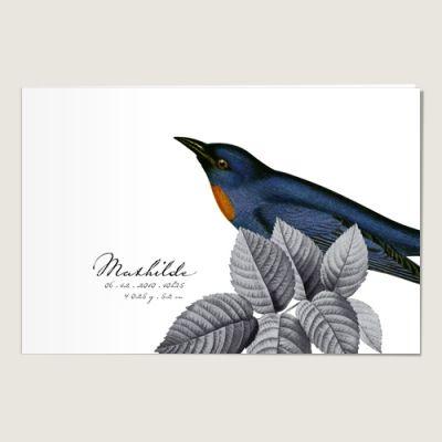 faire part de naissance l 39 oiseau bleu naissance faire part pinterest vintage. Black Bedroom Furniture Sets. Home Design Ideas