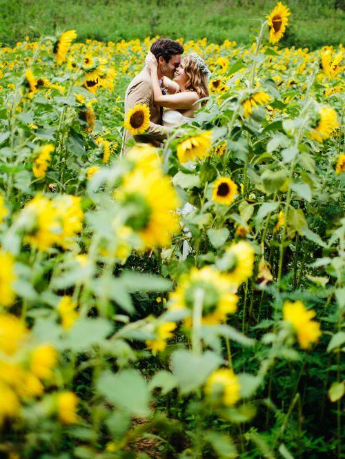 #sunflower #cottage