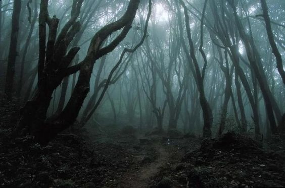 eerie scenery | Setting: The dark forest setting is a more stereotypical associated ...: