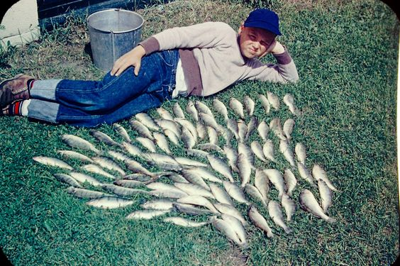 I caught a lot of fish in 1954.