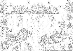 Tolle Fische zum ausmalen