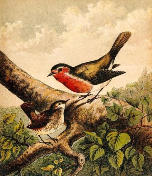 518px-Book_Illustration_of_a_Robin_and_Wren.jpg (518×599):