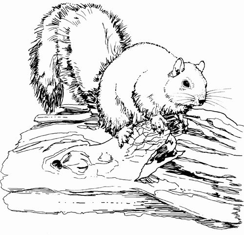 Free Printable Animal Coloring Pages Di 2020 Drawings Gambar