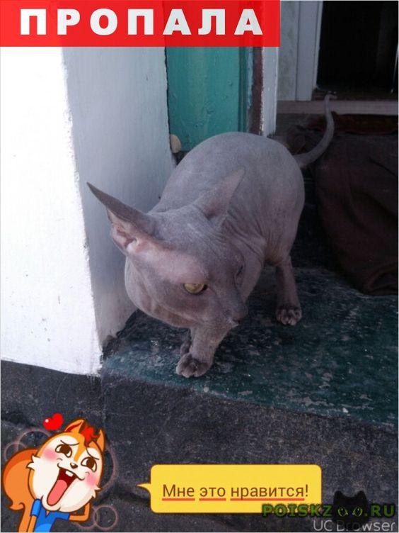 Пропал кот г.Евпатория http://poiskzoo.ru/board/read24168.html  POISKZOO.RU/24168 Пропал кот-сфинкс. Голубой окрас. В районе Транспортная .. Очень скучаю  РЕПОСТ! @POISKZOO2 #POISKZOO.RU #Пропала #кошка #Пропала_кошка #ПропалаКошка #Евпатория