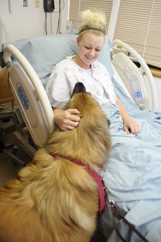 Dogs And Mental Health Therapy Dog Training Therapy Dogs Dog
