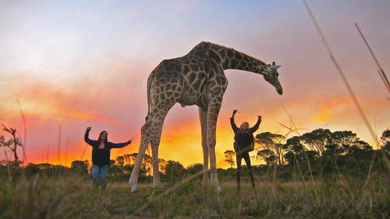 """""""Making pals along the way on our trip in South Africa. Hanging out with our pal, Abby (Adorably Big Baby)."""" -- Danielle"""