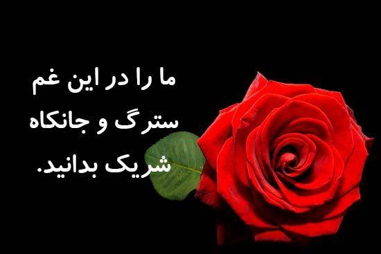 عکس نوشته پیام تسلیت Plants Rose Flowers