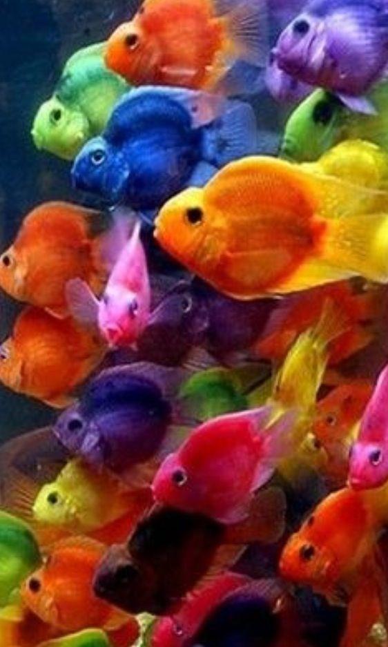 Get Out Of My Way Fish Beau Poisson Animaux Beaux Animaux