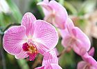 Grow Orchids in Your Home
