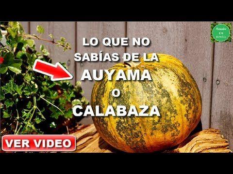 semillas de calabaza de próstata youtube