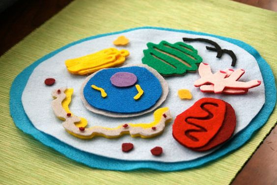 Animal Cell Model Felt Set Science Toy by CakeInTheMorn on Etsy: