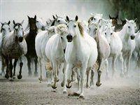 Cavalos em disparada pela estrada