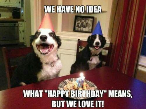 Pin By Karen Levin On Directives For The Heeler Groups Happy Birthday Dog Birthday Meme Dog Happy Birthday Animals