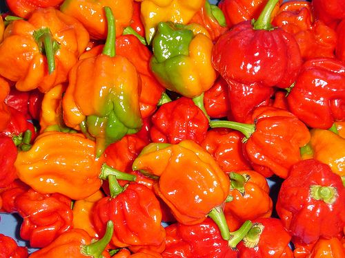 Butch T Trinidad Scorpion Peppers