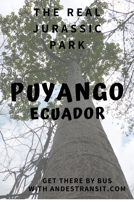 Puyango Ecuador (Pinterest)