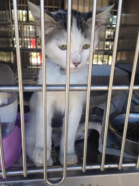 lizardmarsh: Downey CA: 7/24 new photo. $125 pledged re: clock ...