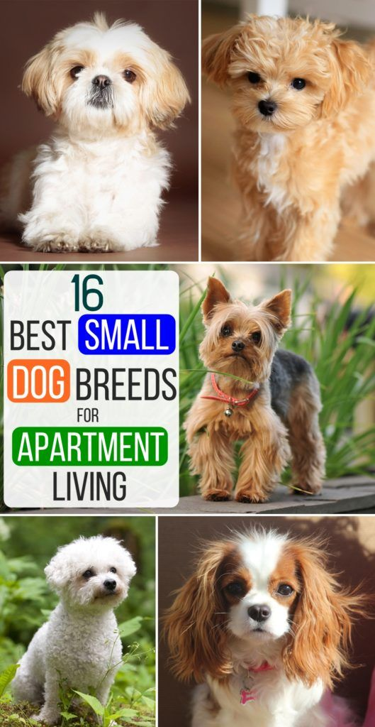 15 Best Apartment Dogs For People With Small Spaces And Big Hearts Apartment Dogs Best Apartment Dogs Dog Friends