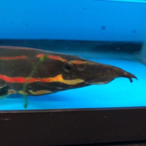 Pin On Exotic Fish Shop