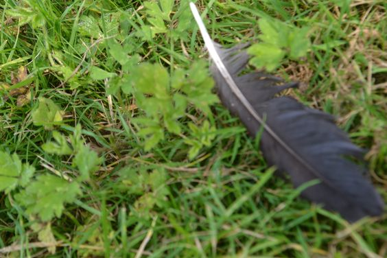 this is another photo of a feather on the ground and i used macro setting.