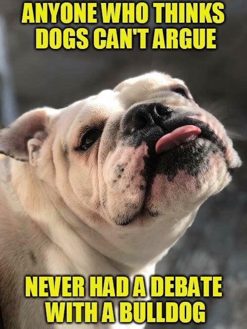 Idea By The Great British Bulldog On Bulldog Memes Bulldog