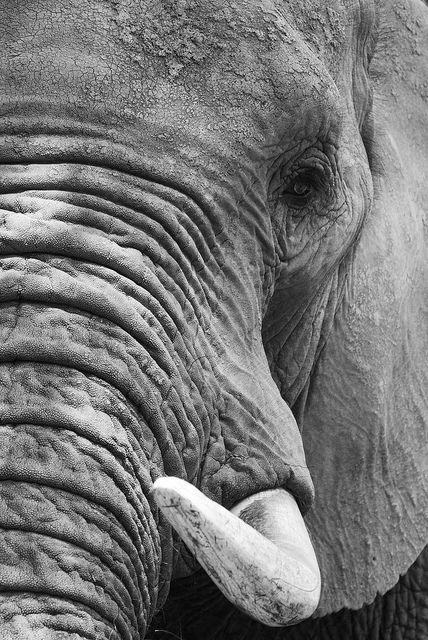 Will never look at an elephant the same way again. #takemebacktothailand!