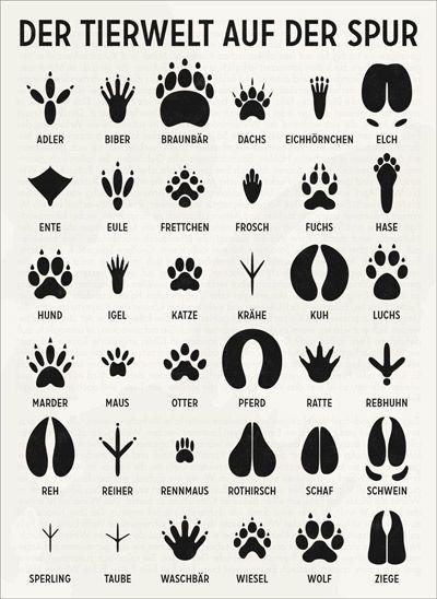 """Tierspuren, Infografik aus dem """"Lily Lux Notizbuch"""", Illustration © 2011 Iris Luckhaus"""