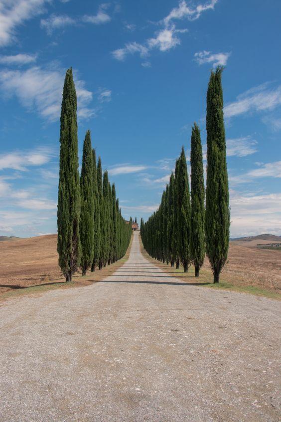 Poggio Covili - Poggio Covili in Val d'Orcia, Tuscany.