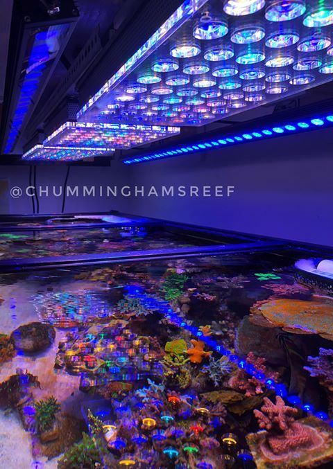 Best Led Lights For Reef Tank 2018 2019 Review Reef Tank Reef Tank Light Saltwater Tank