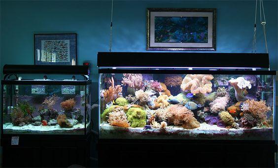 Reef aquarium aquarium and aquarium store on pinterest for Saltwater fish tank for sale