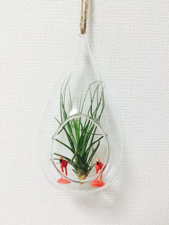 airplant and flamingo.  Is it botanical??