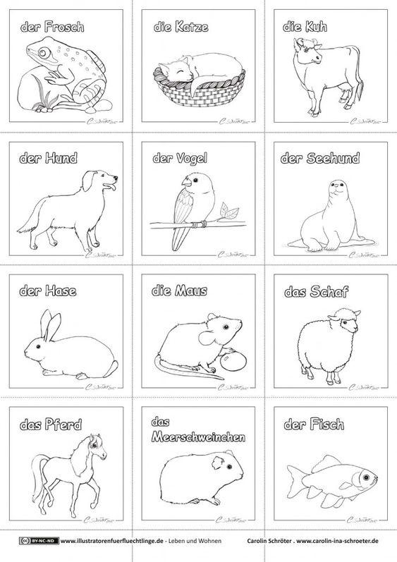 Leben und Wohnen - Haustiere - Schroeter