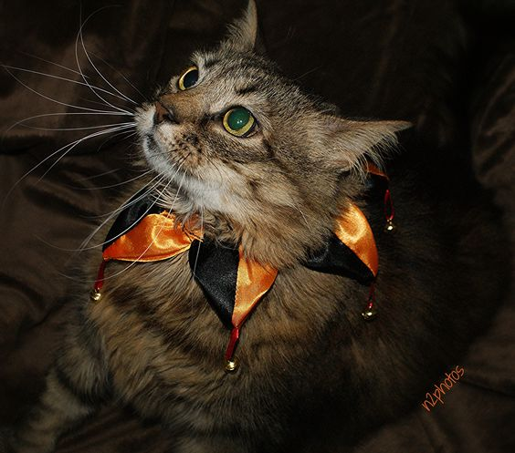 NessaRose | All dressed up for Halloween!