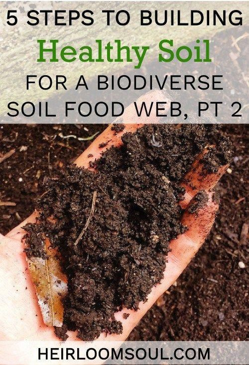 The Dead Soil Requires Increasing Doses Of Standard Fertilizer And Still The Plants Are Malnouri Healthy Organic Organic Gardening Soil Organic Gardening Tips