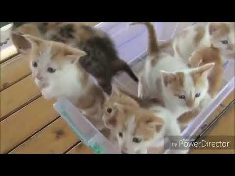 Suara Anak Kucing Lucu Imut Dan Cerdik Youtube Animals Youtube Gatos