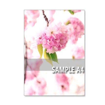 日本の春を代表する桜の花。その中でも、華やかで、手鞠のように咲く八重の関山(カンザン)。この木の関山が大好きです。ほかの木では、関山でもダメなのです。オーガン...|ハンドメイド、手作り、手仕事品の通販・販売・購入ならCreema。